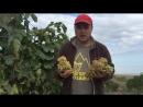 Виноградная плантация Дагестан Сок 250₽ литр