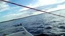 Вейкборд на Белом море