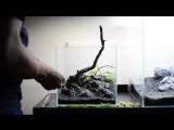 Step-By-Step Nano Aquascape- Amelia 25cm cube