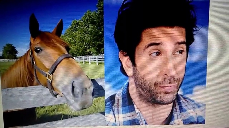David Schwimmer was made from Horse DNA! (proof)