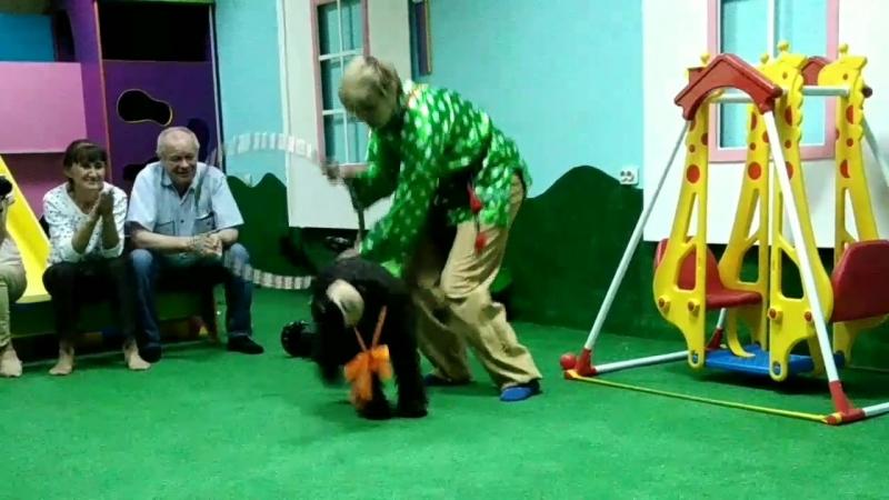 Цирковая собачка Зорька в Егозе.