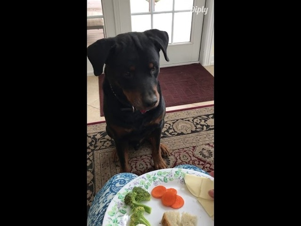 Even Dogs don't eat BLAND cooked vegetables
