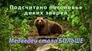 Медведи расплодились Сколько в России диких зверей