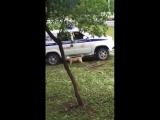 Полиция застрелила собаку|По жести