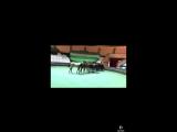 mine 10 horses akhalteke just babyies 1 years old #Akhalteke