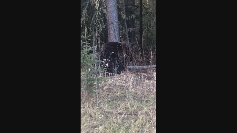 Убил маму медвежат
