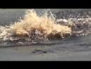 Аллигатор убивает щитомордника
