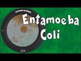 Entamoeba coli - como reconhecer e diferenciar de Entamoeba histolytica