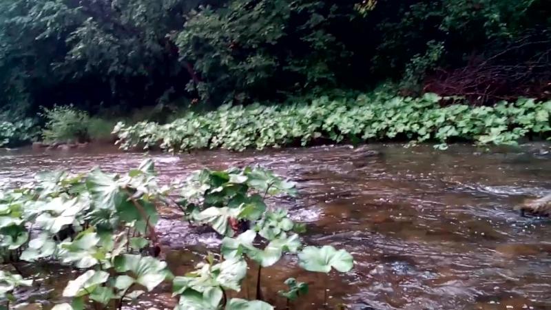 Река Зиган вблизи деревни Гумерово