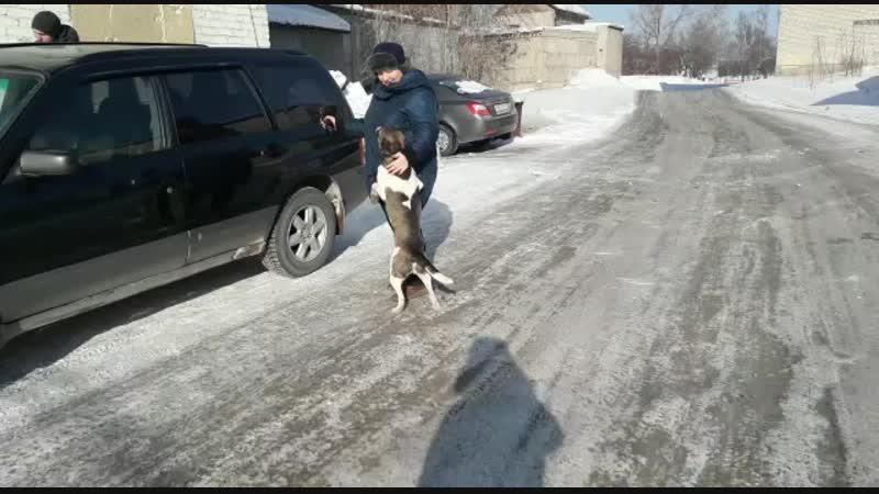 Альф, Ральф, Снежок и Спанни встречают Ольгу)