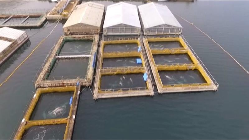 Китовая тюрьма в Приморье беспилотник заснял вольеры с десятками белух и косаток