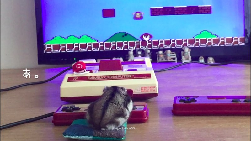 ハムスター「そうだ マリオ、やろう。」Let's play Super Mario Bros game! by Hamster