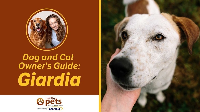 Лямблии у собак и кошек / Dog and Cat Owner's Guide: Giardia