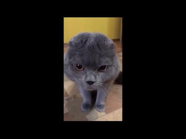 Кот жалуется на головную боль