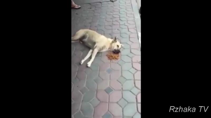 Дали корм бродячей собаке