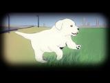 Собака - единственное существо на земле которое любит тебя больше чем себя