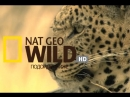 Nat Geo Wild HD промо