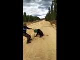 Минэкологии: ролик о медведе с канистрой на голове был снят не в Якутии