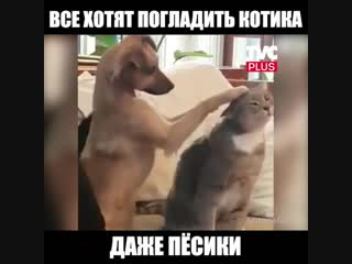 Пёсик гладит котика