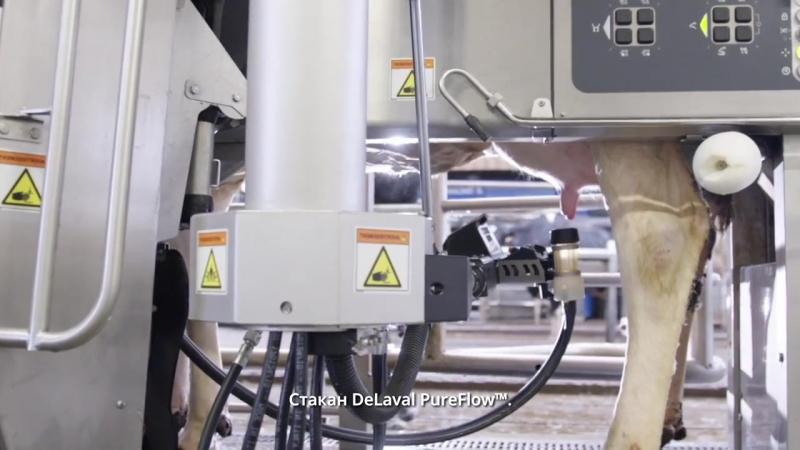 DeLaval VMS™ V300. Новая система добровольного доения.