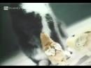 Кошка и ее дети - цыплята