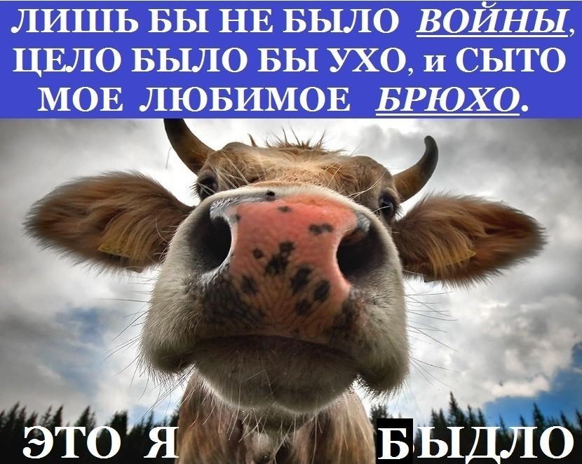 https://pp.userapi.com/c847018/v847018557/87fe4/JDcFtRqmq3A.jpg