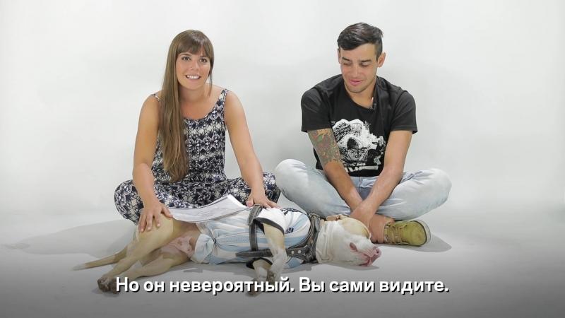 Двое в машине, не считая собаки - путь из Аргентины на ЧМ в Москву