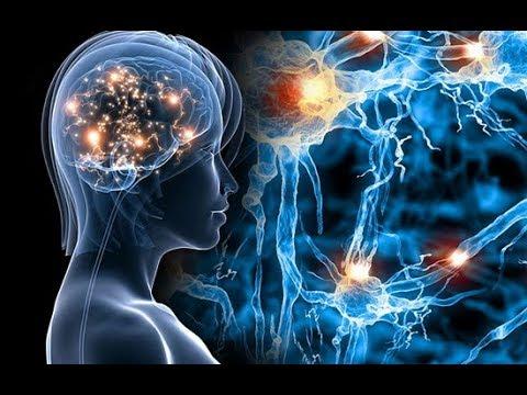 мозг человека пожиратель энергии не прокормишь