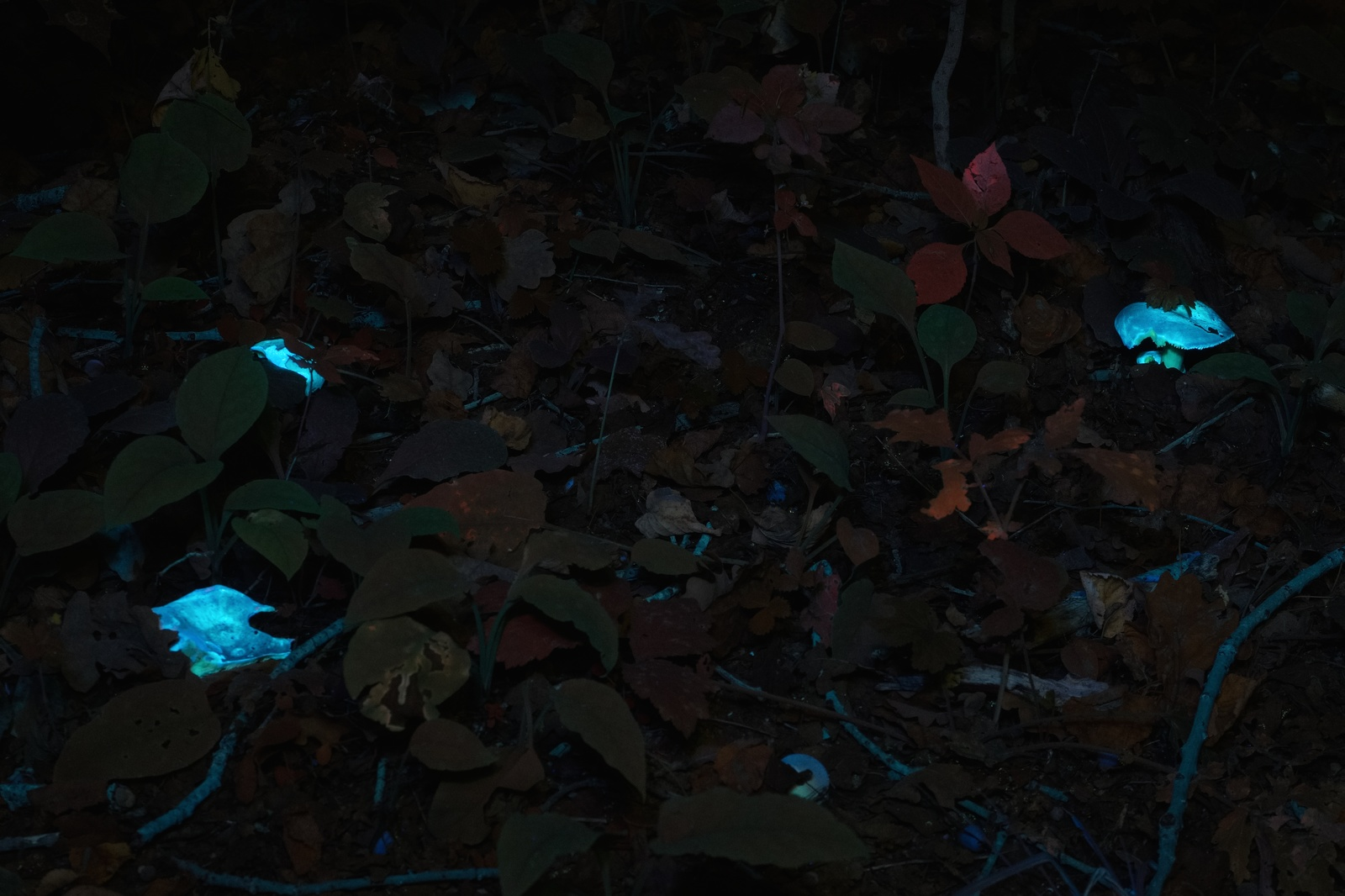 Ночной лес в ультрафиолете