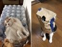 Лучшие приколы приколы с домашними животными jokes with Pets