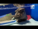 Happy Valentines Day! Fiona is here today because of the TLC she received from ( 480p ).mp4