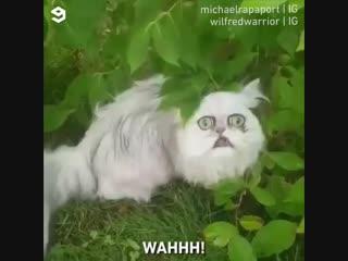 Самый красивый котэ 😀