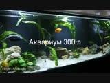 Мой аквариум.
