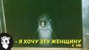 ВЫ НЕ ПОВЕРИТЕ, НО ЭТОТ ДЕЛЬФИН ВЛЮБИЛСЯ В ЖЕНЩИНУ [Белый кот]