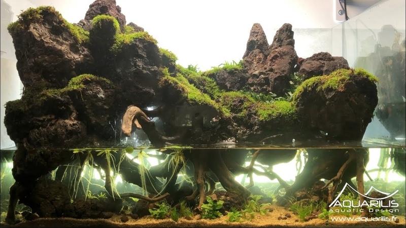 Un paludarium en aquascaping ! Un décor inspiré du Mordor - Par Laurent Garcia