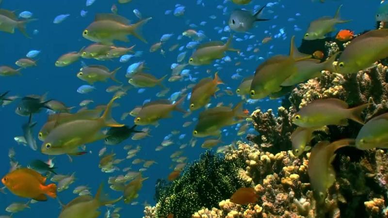 Подводная флора и фауна (Филипины)