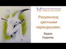 Рисуем козу цветными карандашами Вадим Ладанов