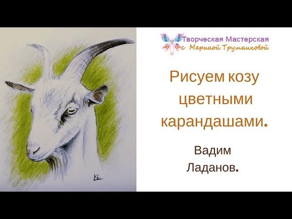 Рисуем козу цветными карандашами. Вадим Ладанов