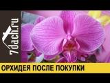 Орхидея- первые действия после покупки - 7 дач