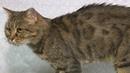 Ищу хозяина: кошка Келли 12