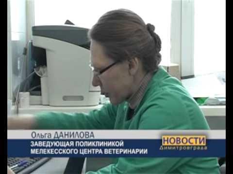 Димитровградские коты-рекордсмены