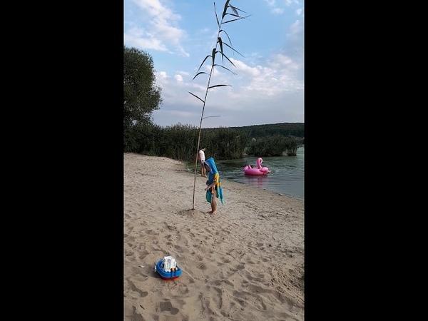 Пляж Сажаем дерево