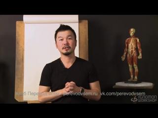 Практический курс по анатомии: строение ног и бёдер. Часть 7