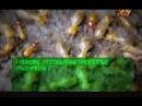 Телепортация матки термитов