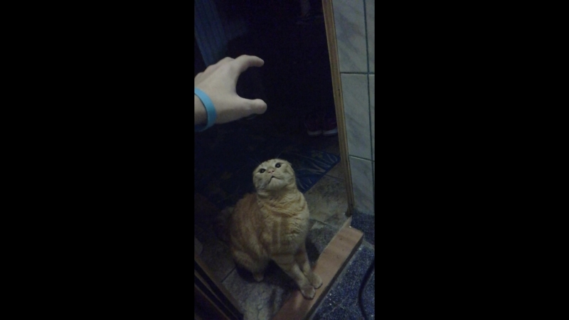 Мой кот ущемляет меня в туалете