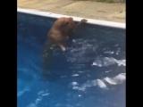 У меня самая не умеющая плавать собака)))/гнездо пересмешника