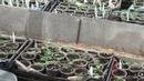 Выращиваем томаты и огурцы Мои советы и секреты