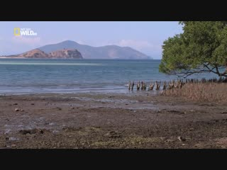 Ост Индия: Лесные жители / East Indies: Forest fighters