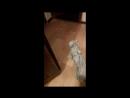 Наша Говорящая Кошка Пуся. ( 720 X 1280 ).mp4