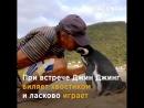 Пингвин. Настоящая любовь ♥ Истинные чувства ♥